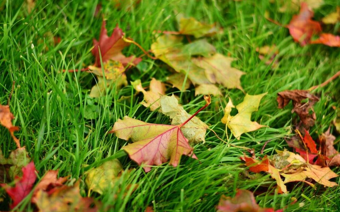 5 Fall Lawn Maintenance Tips