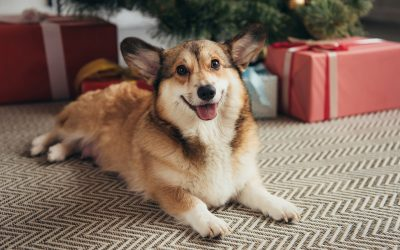 4 Tips for Pet Safety Over the Holidays